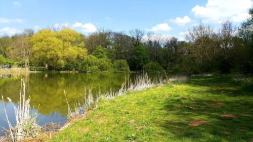 Baden See Natur Teich