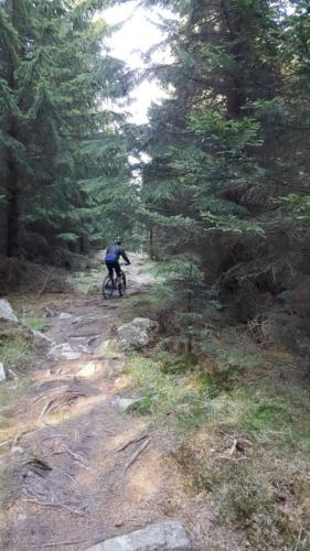 Fahrrad E-Bike Mountainbike Trail S2 Harz