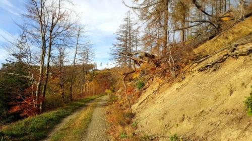 gefuehrt Touren Wanderung Harz Landschaft Ausblick Reisen V